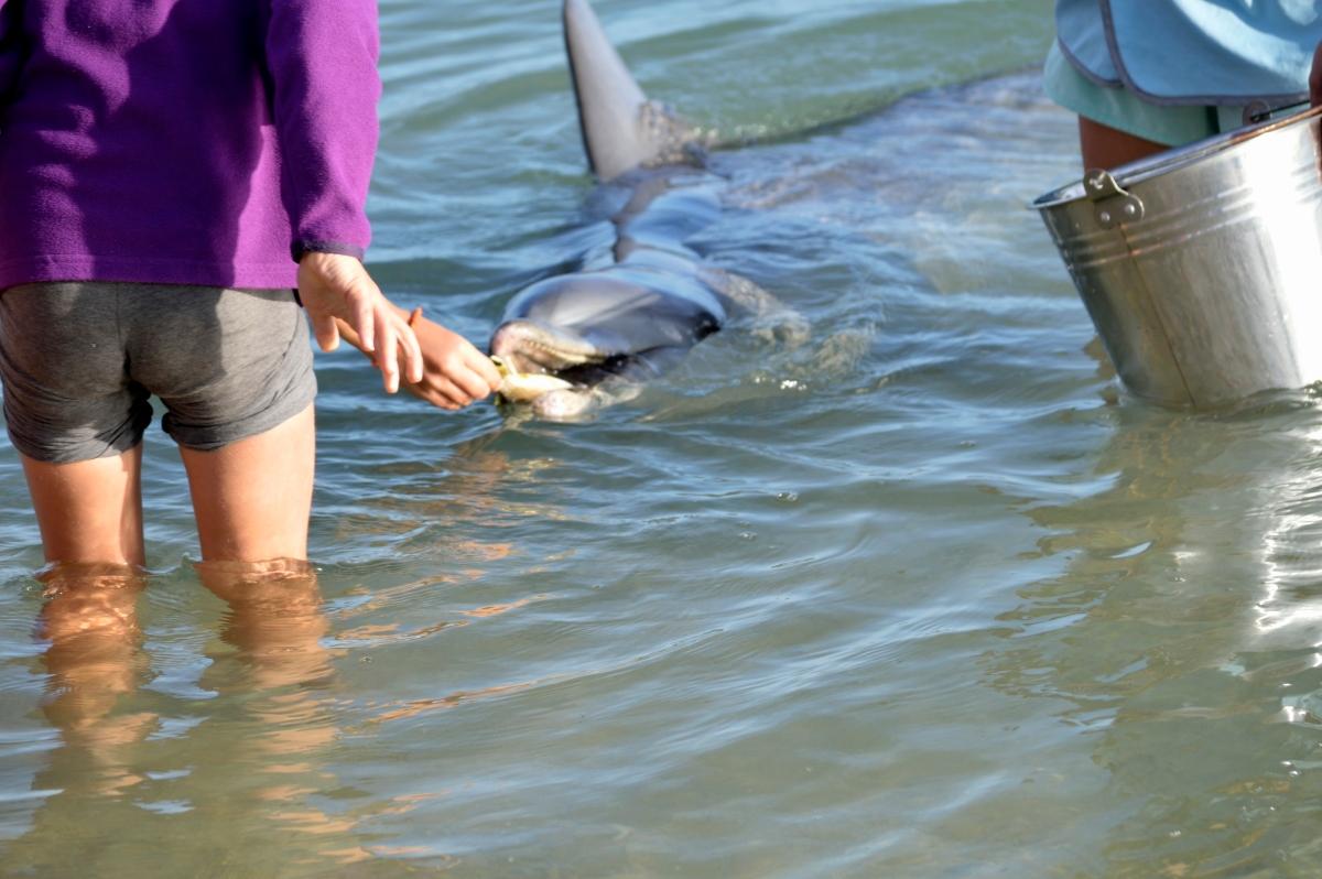 Feeding the Dolphins at MonkeyMia